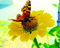 butterfly news 11