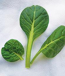 Green Tatsoi